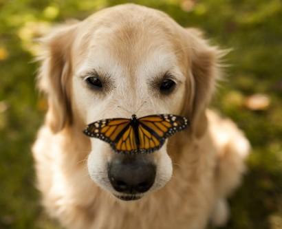 A lelke mélyén minden állat Süsü? – <br />8 állat, akik meghitt kapcsolatba kerültek pillangókkal
