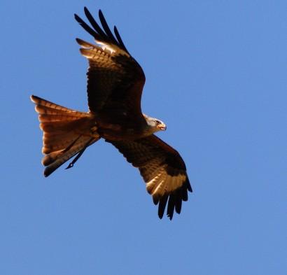 Nyelv és Tudomány- Főoldal - A madarak és fák napja